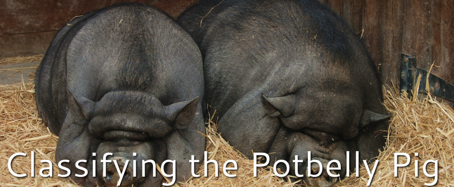 Classifying the Potbelly Pig - Taxonomy